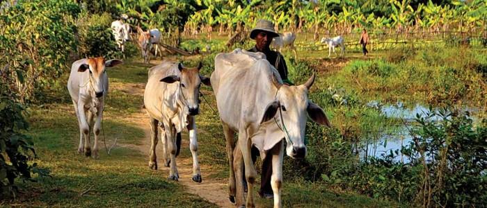 Proyectos Agrícolas Sauce ONG